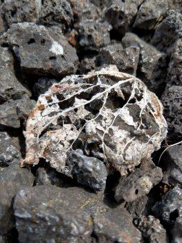 Blattadern eines vertrockneten Lindenblatts auf dunkelgrauen Schlackesteinen